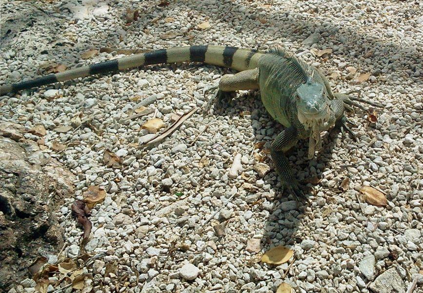 Bonaire Island PJ4/AA2WN Tourist Attractions