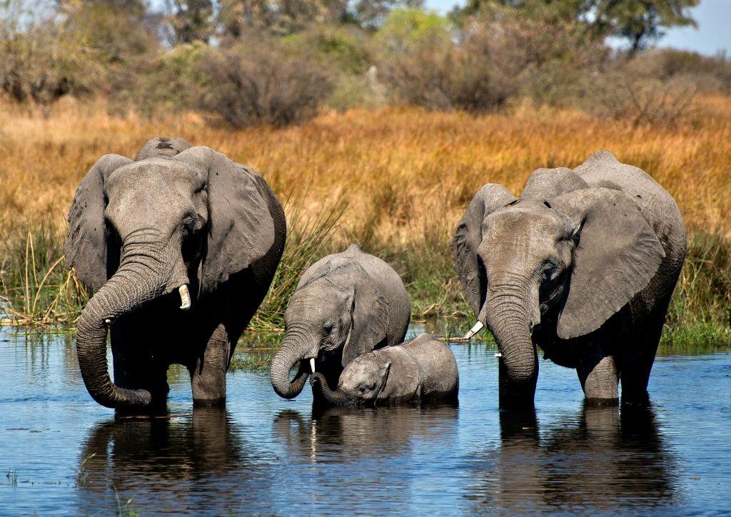 Ботсвана A25/HB9CPS Туристические достопримечательности