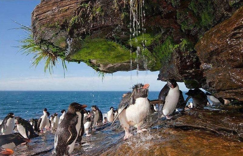 Фолклендские острова VP8DOH