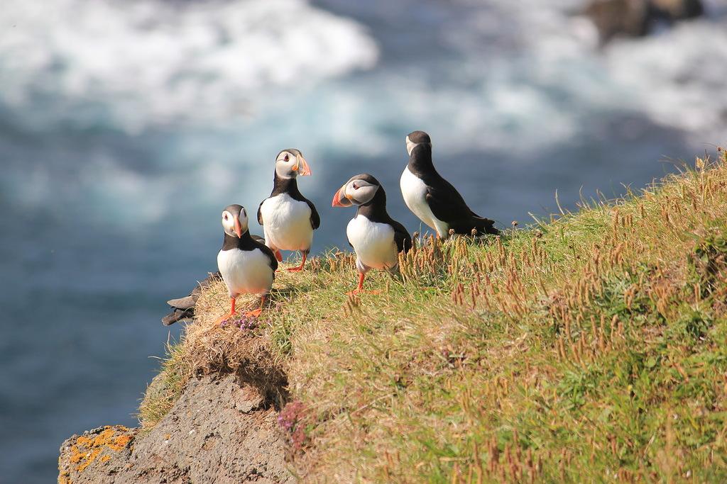 Фарерские острова OW75FOC