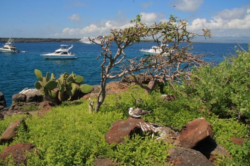 Галапагосские острова  HC2AO/8 DX Новости