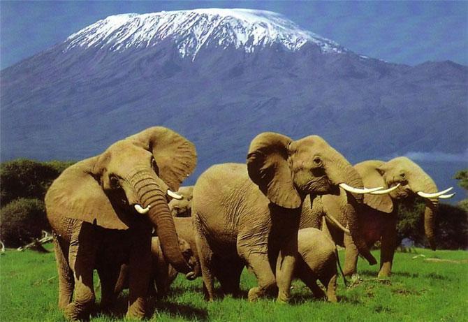 Кения 5Z4/JH0CJH DX Новости Слоны