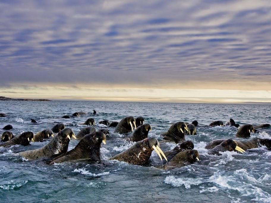 Svalbard Islands JW/DK8FD DX News