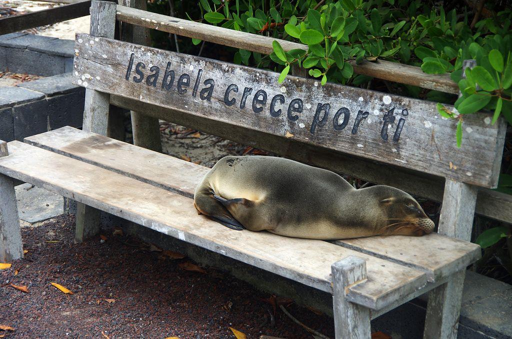 Остров Исабела Галапагосские острова HC8ART DX Новости