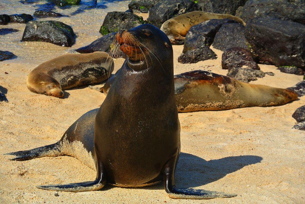 Остров Исабела Галапагосские острова HC8ART Туристические достопримечательности